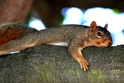 Tired Old Squirrel . R6622 Art Print