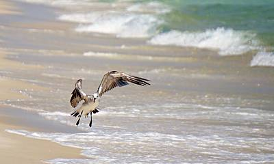 Panama City Beach Photograph - Tired Seagull by Brad Zimmerman