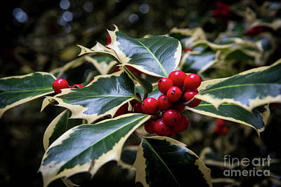 Photograph - Tis The Season by Sandy Molinaro
