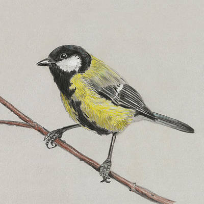 Titmouse Painting - Tit Bird by Masha Batkova