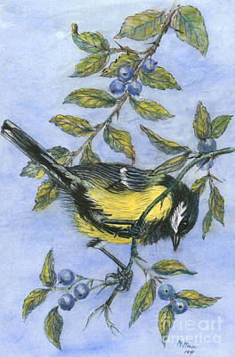 Blueberry Drawing - Tit In Blackthorn And Sloe by Nell Hill