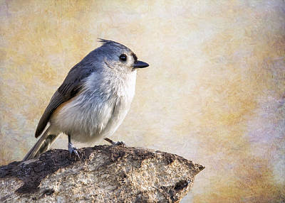 Titmouse Digital Art - Tit On A Cliff by Bill Tiepelman