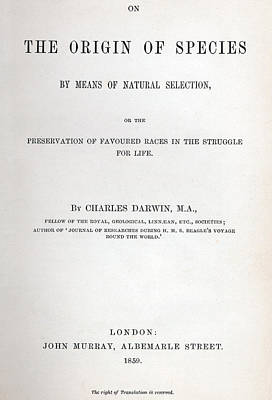 Book Title Drawing - Title Page Of The Origin Of Species By Charles Darwin by Charles Darwin
