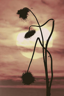 Photograph - Thistles At Sunrise II by Garry McMichael