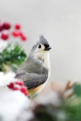 Tufted Titmouse Photograph - Titmouse Bird Portrait by Christina Rollo
