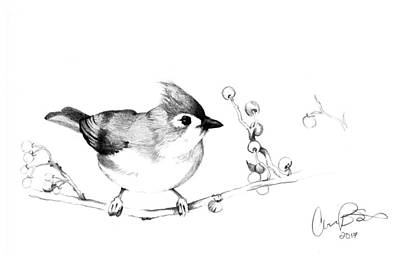 Titmouse Drawing - Titmouse by Corinne States