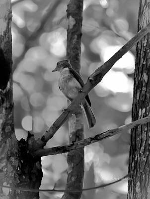 Tufted Titmouse Photograph - Titmouse Daydream by DigiArt Diaries by Vicky B Fuller