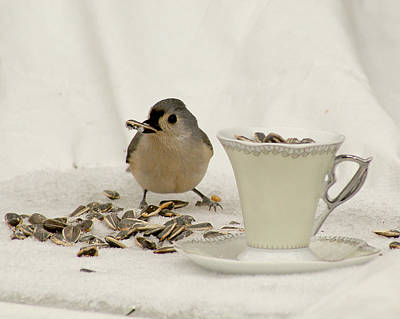 Photograph - Titmouse Dining On A Cup Of Seeds by Margie Avellino