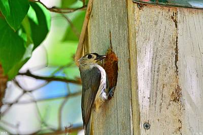 Photograph - Titmouse Home by Lisa Wooten