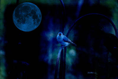 Photograph - Titmouse In The Moonlight by Ericamaxine Price