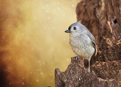 Baeolophus Bicolor Photograph - Titmouse On Lookout by Bill Tiepelman