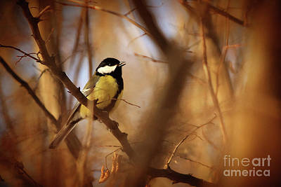 Photograph - Titmouse Song In The Forest by Dimitar Hristov