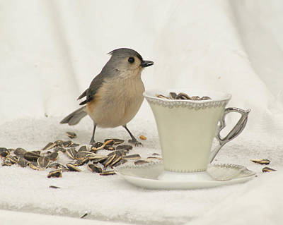 Photograph - Titmouse With A Cup Of Seeds by Margie Avellino