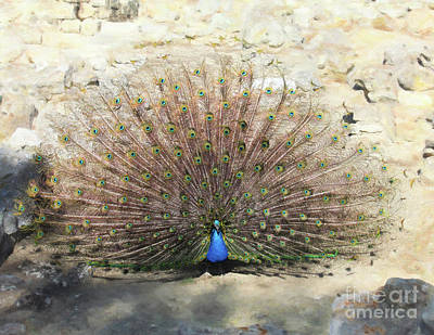 Digital Art - Tito The Peacock Dances by Donna Munro