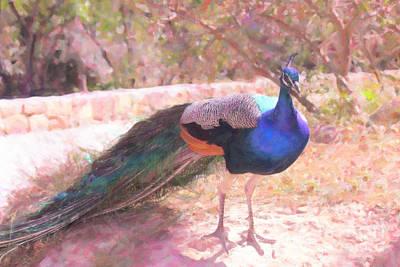 Photograph - Tito The Peacock by Donna L Munro
