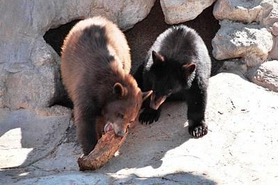 Photograph - To Both These Bears by Matt Harang