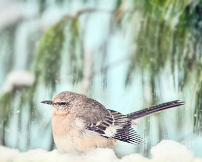 Photograph - To Chill A Mockingbird by Kerri Farley