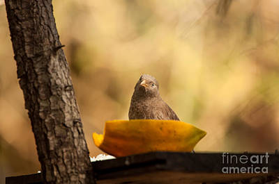 Photograph - To Eat Or Not To Eat by Venura Herath