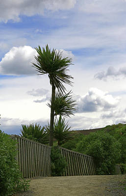 Photograph - To Kouka Cabbage Tree by Nareeta Martin