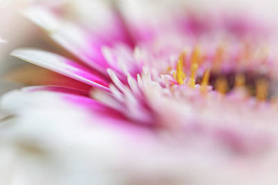 Photograph - To Live In Dream 1. Macro Gerbera by Jenny Rainbow