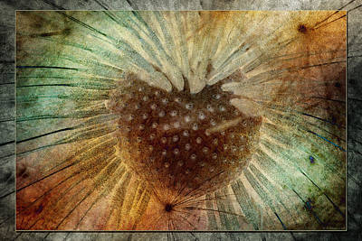 Photograph - To Seed 3 by WB Johnston