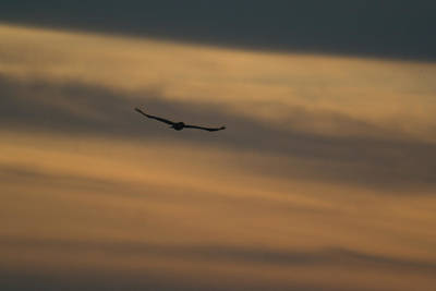 Photograph - To Soar - Free by Douglas Barnett