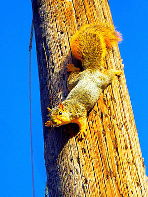 Photograph - To Squirrels And To Me by Guy Ricketts