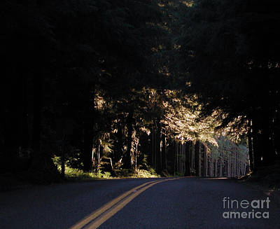 Photograph - To The Light by Kathi Shotwell
