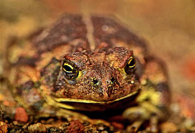 Photograph - Toad 010 by George Bostian