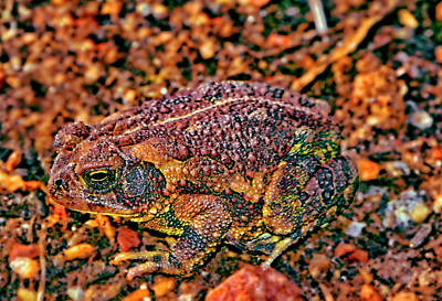Photograph - Toad 011 by George Bostian