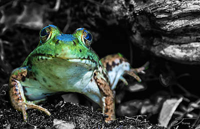 Wall Art - Photograph - Toad Frog by J Thomas
