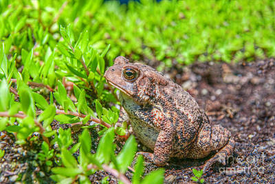 Childrens Books Photograph - Toad In The Grass by Randy Steele