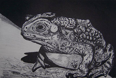 Frogs Mixed Media - Toad by Jude Labuszewski