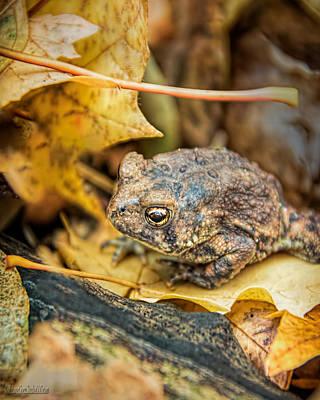 Photograph - Toad Nature Wear by LeeAnn McLaneGoetz McLaneGoetzStudioLLCcom