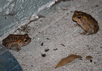 Telepathy Photograph - Toad Talk by DigiArt Diaries by Vicky B Fuller
