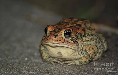 Photograph - Toad by Terri Mills