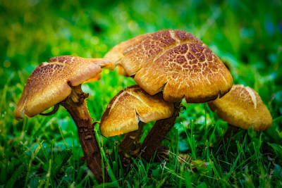Photograph - Toadstools by Chris Bordeleau