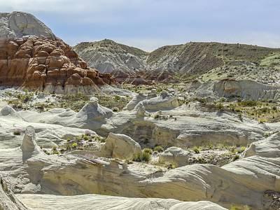 Photograph - Toadstools Panorama by NaturesPix