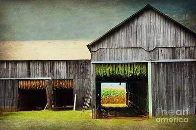 Tobacco Drying Art Print
