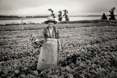 Photograph - Tobacco Farm by Mary Buck