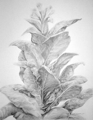 Tobacco  Art Print