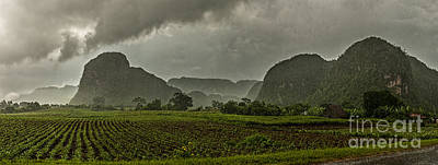 Photograph - Tobacco Plantation Under The Rain by Jose  Rey