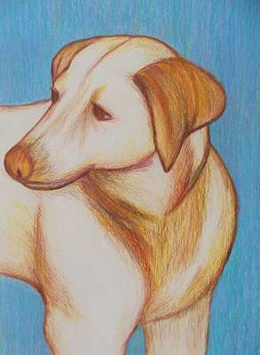 Drawing - Tobie by Beth Akerman