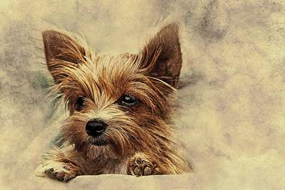Pyrography - Toby The Yorkie by Movie Poster Prints
