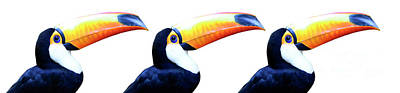 Photograph - Toco Toucan Trio by Bob Christopher