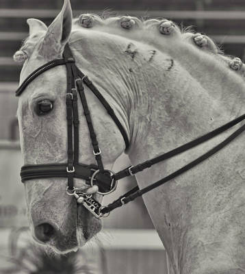 Photograph - Today's Destrier by JAMART Photography