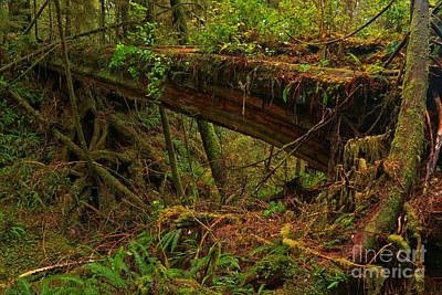 Photograph - Tofino Natural Bridge by Adam Jewell