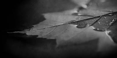 Nature Study Photograph - Together At Last In Black And White by Maggie Terlecki