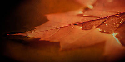 Maple Leaf Art Photograph - Together At Last.  by Maggie Terlecki