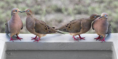 Pigeon Photograph - Together For Life by Betsy Knapp